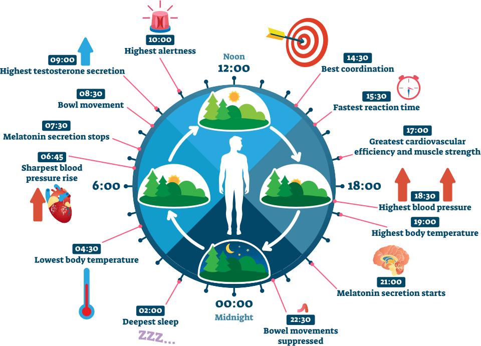 infografika cirkadiánní osvětlení