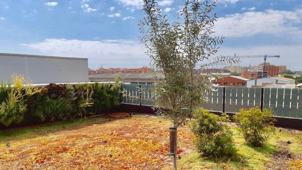 Pohled na zelenou střechu