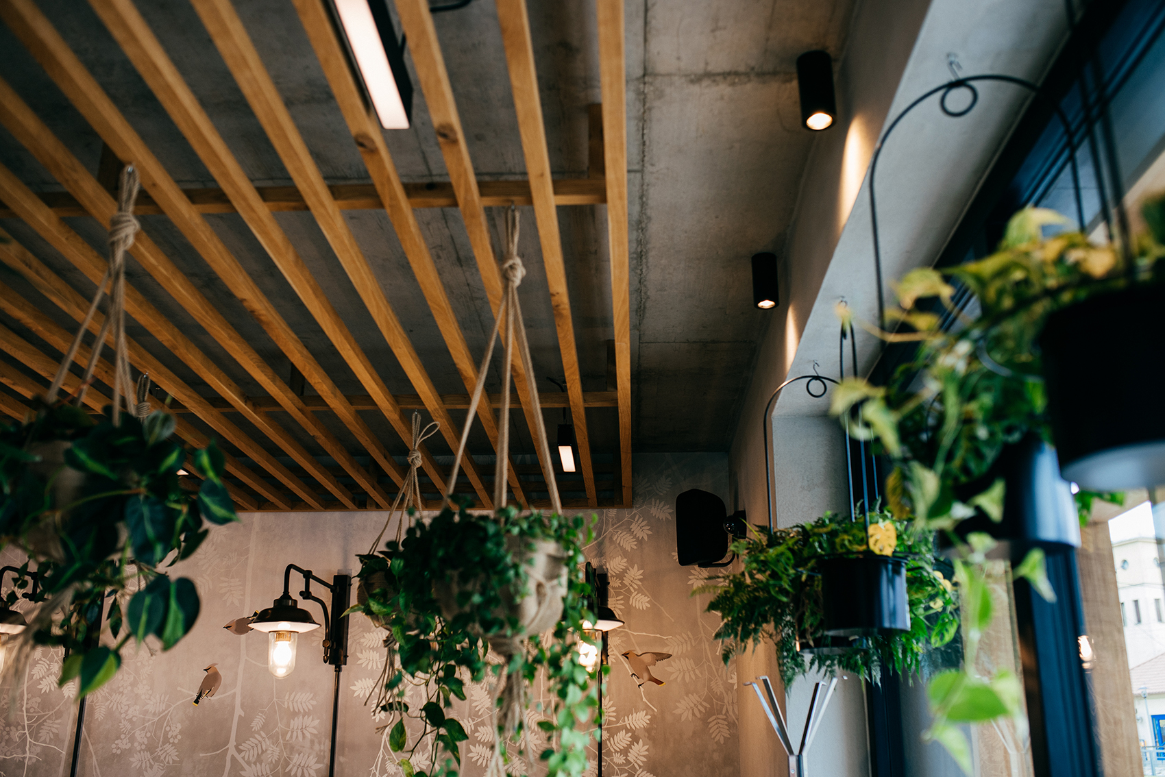 Hanging plants in coffee shop