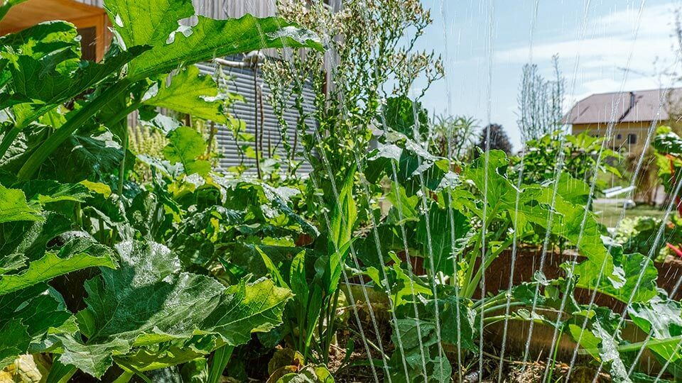 Wassersprinkler der Gartenbeet bewässert