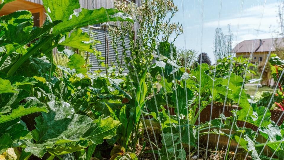 Zavlažovanie pri pestovaní